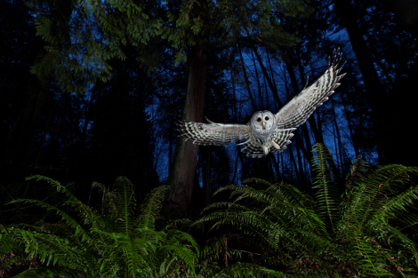 'The flight path' © Connor Stefanison/ Wildlife Photographer of the Year